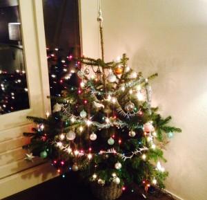 Opgetogen Nordmann kerstboom